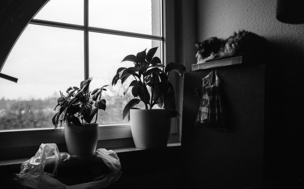 2013_01_02_APX_100-400_004-1